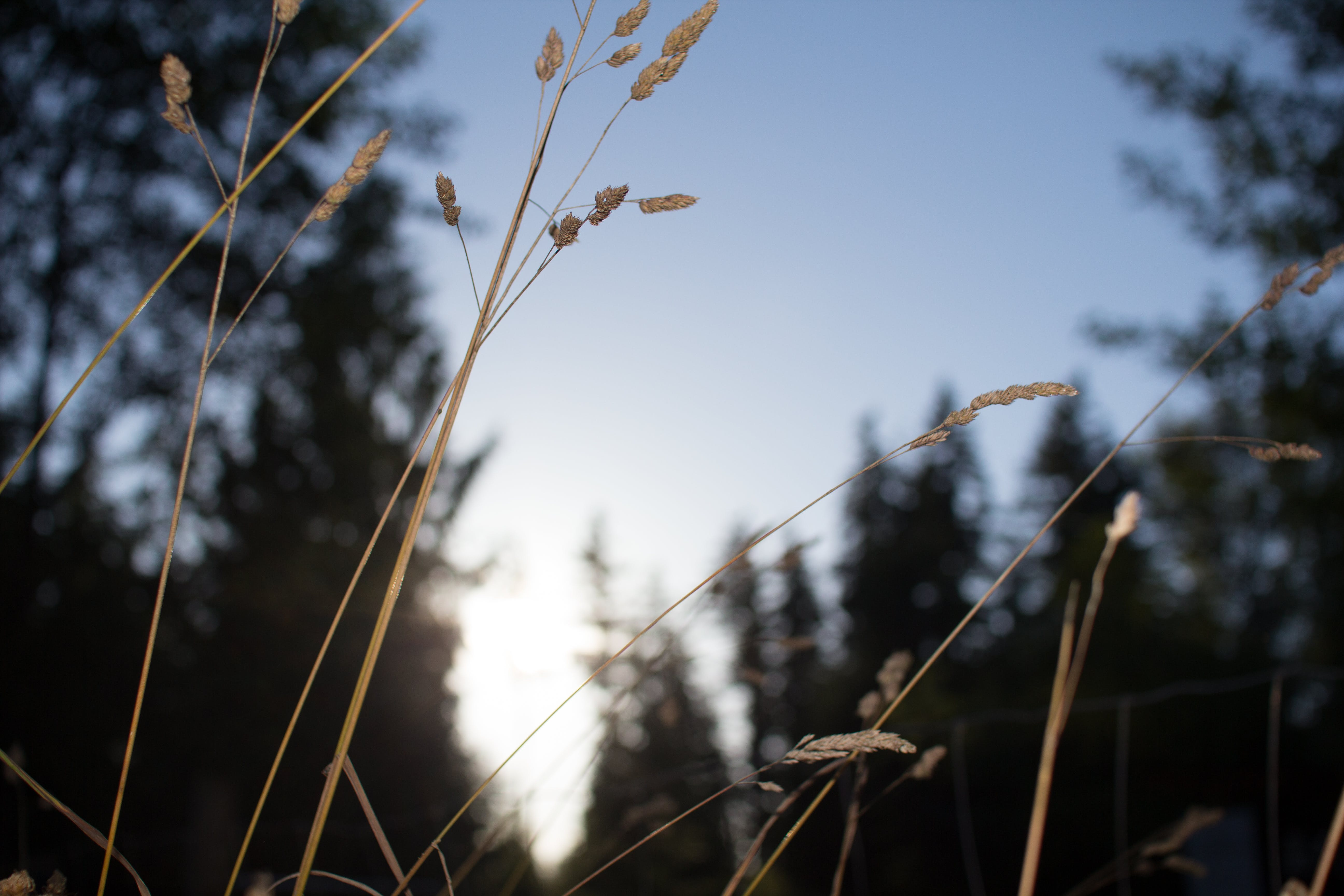 Free stock photo of depth of field, dof, evening, foliage