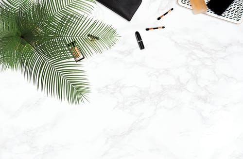 Безкоштовне стокове фото на тему «білий фон, декоративна рослина, зйомка з висоти»