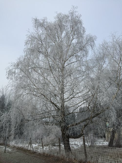 Fotos de stock gratuitas de árbol de invierno