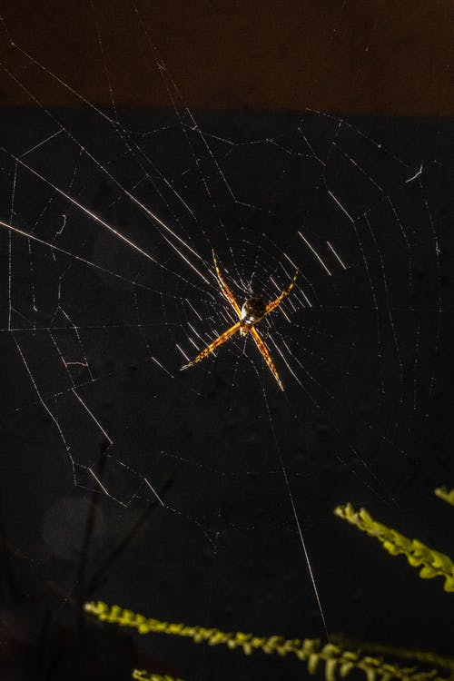 From below of cobweb with spider hanging near green plant against night sky in countryside