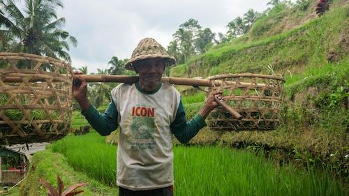 Foto profissional grátis de agricultor, agricultura, arrozais, chácara