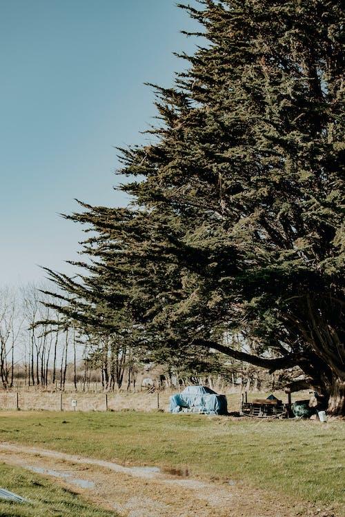 Árvores Verdes Sob O Céu Azul