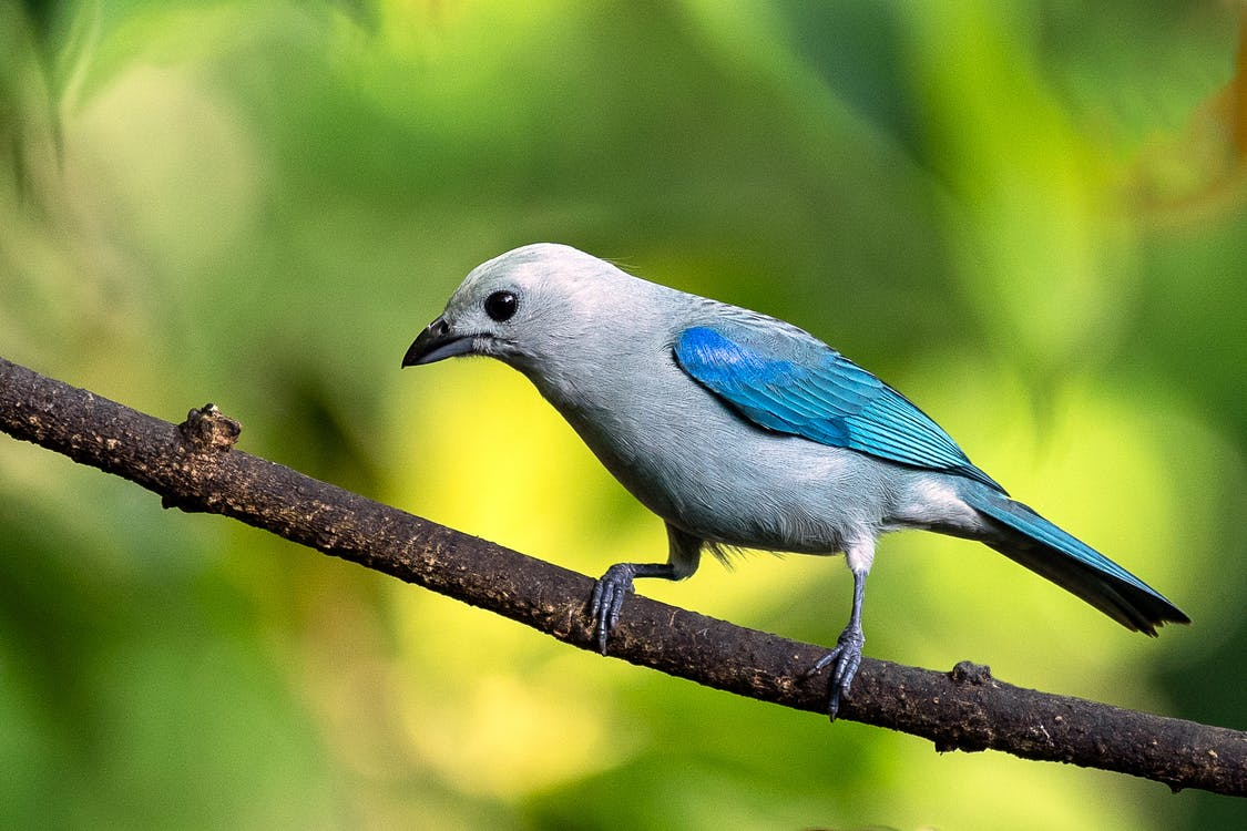 Blue and Gray Bird on Brown Tree Branch