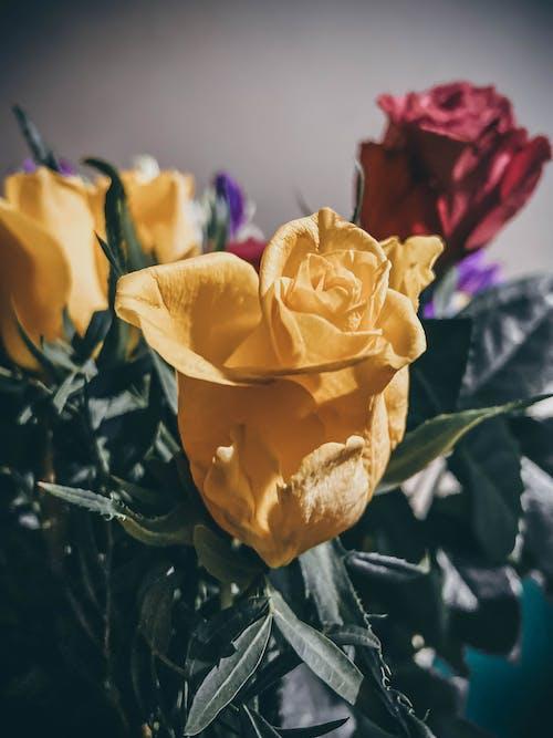 Free stock photo of beautiful flowers, blooming flowers, flower arrangement, flower bouquet