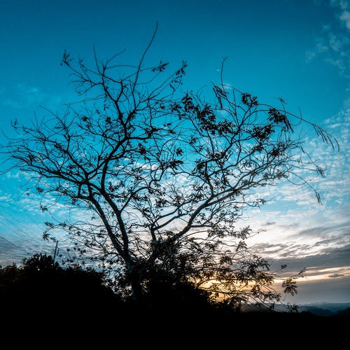 Free stock photo of blue, branch, clouds, dusk