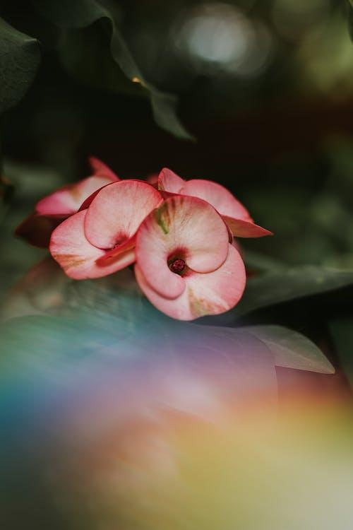 Imagine de stoc gratuită din centrale, culoare, floră, flori