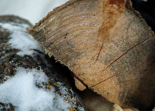 Free stock photo of snow, stacked wood