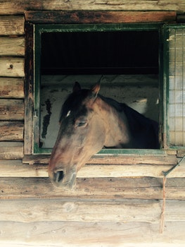 Free stock photo of animal, horse
