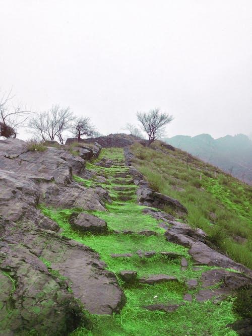 Free stock photo of green stairs, upstairs
