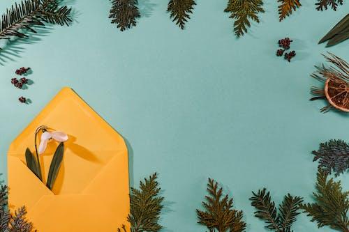 Fotos de stock gratuitas de al aire libre, árbol, Arte, caer