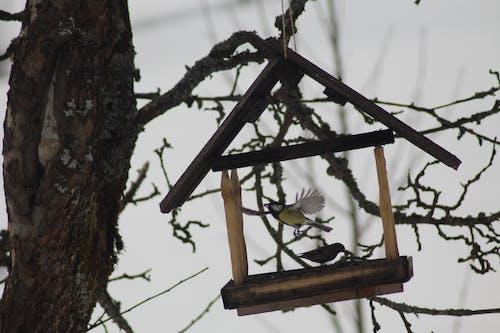Безкоштовне стокове фото на тему «годування, політ, Темний»