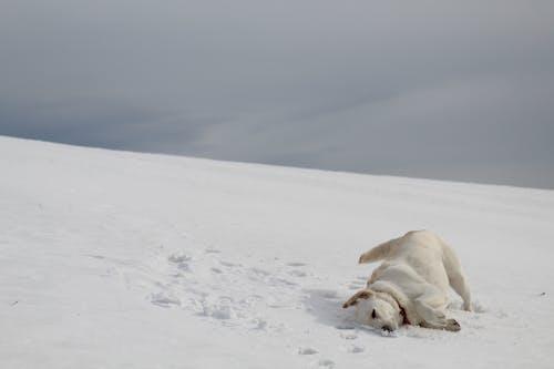 Безкоштовне стокове фото на тему «білий, застуда, зима, Лабораторія»