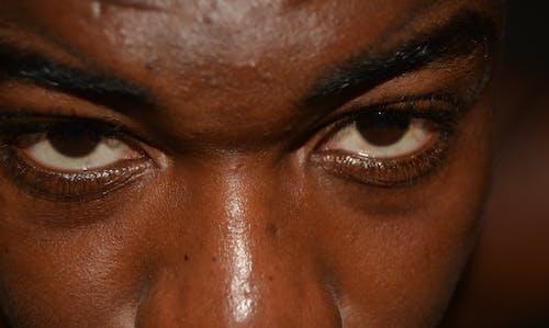Free stock photo of brown eyes, eyes