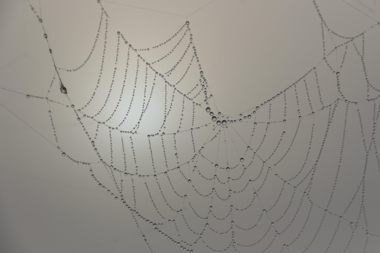 cobweb, spider, spider's web