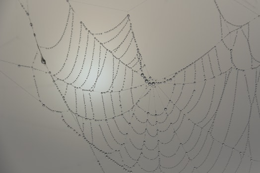 Free stock photo of cobweb, spider, spider's web, spiderweb