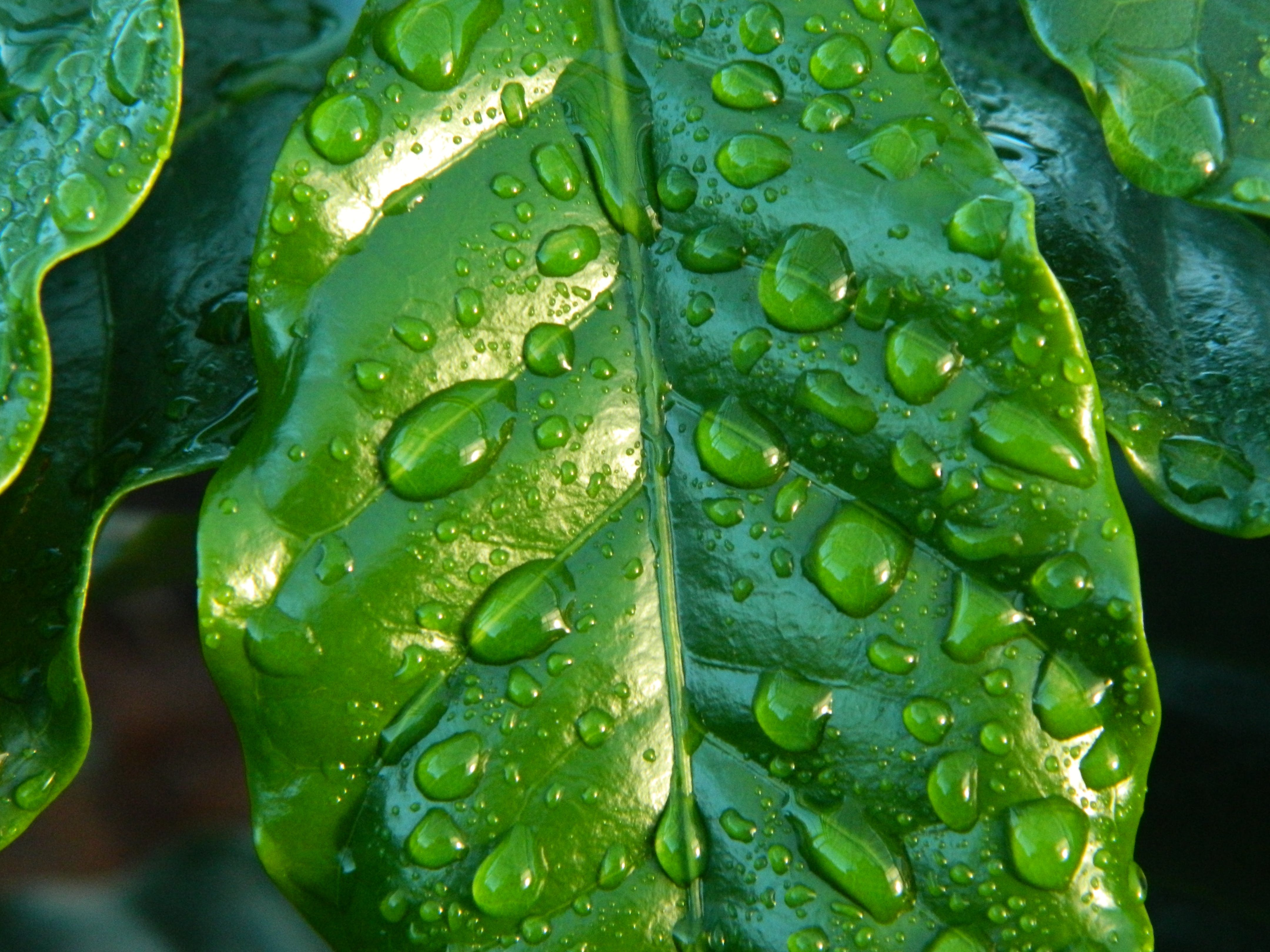 Close-up Photography of Leaf With Water Drops