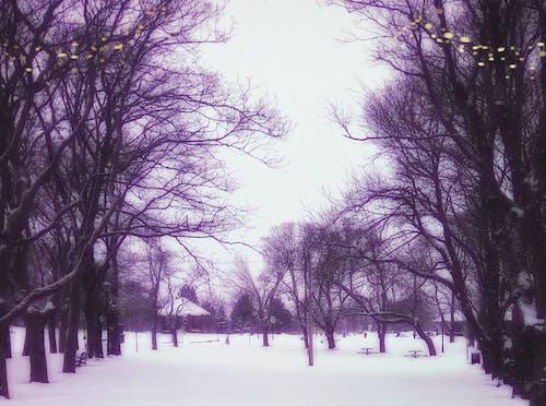 Free stock photo of city park, misty, purple