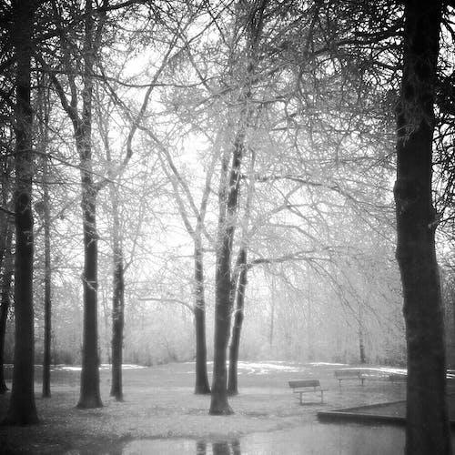 Free stock photo of misty, park, trees