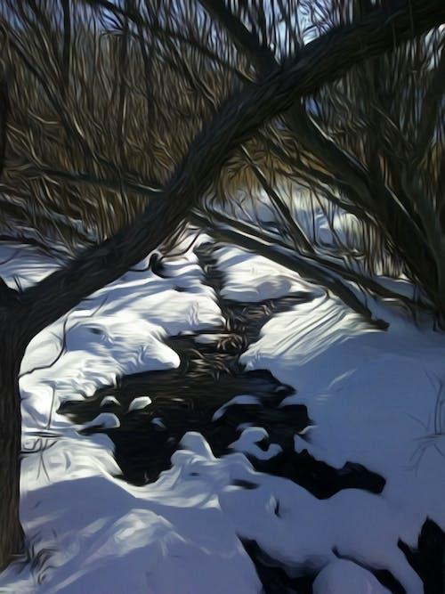 Free stock photo of stream, trees, winter