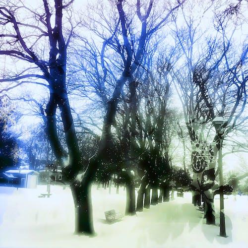 Free stock photo of blue, city park, green
