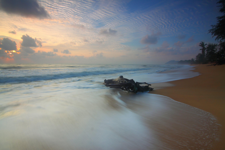 beach, dawn, driftwood