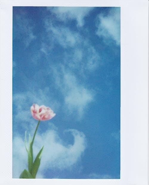 Základová fotografie zdarma na téma barva, flóra, fotka