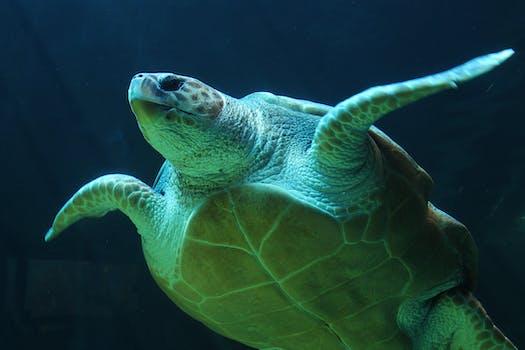 underwater, turtle, sea turtle, sea life - Sealife