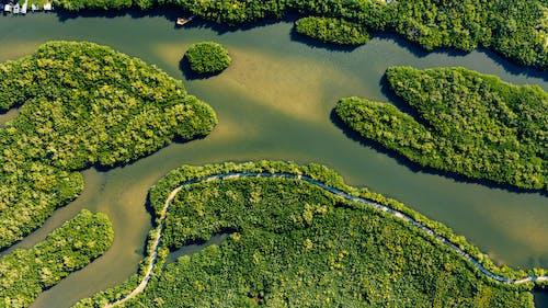 Islas Verdes Cerca Del Río En Verano