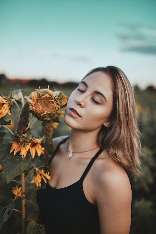 alan, aşındırmak, ayçiçeği tarlası, ayçiçekleri içeren Ücretsiz stok fotoğraf