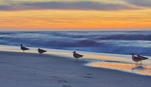 Free stock photo of beach sunset, evening sky, seagull