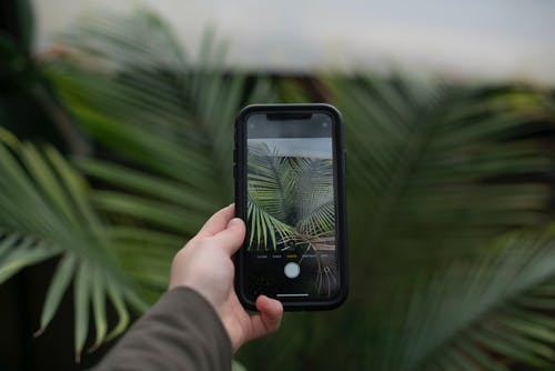 Person Holding Iphone Taking Photo of Green Leaf Plant