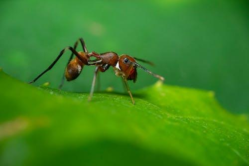Základová fotografie zdarma na téma drobný, hloubka, hmyz, list