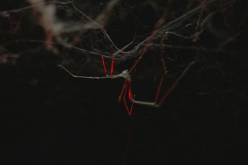 Free stock photo of spide