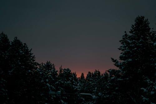 Foto stok gratis backlit, bayangan hitam, Fajar, gelap