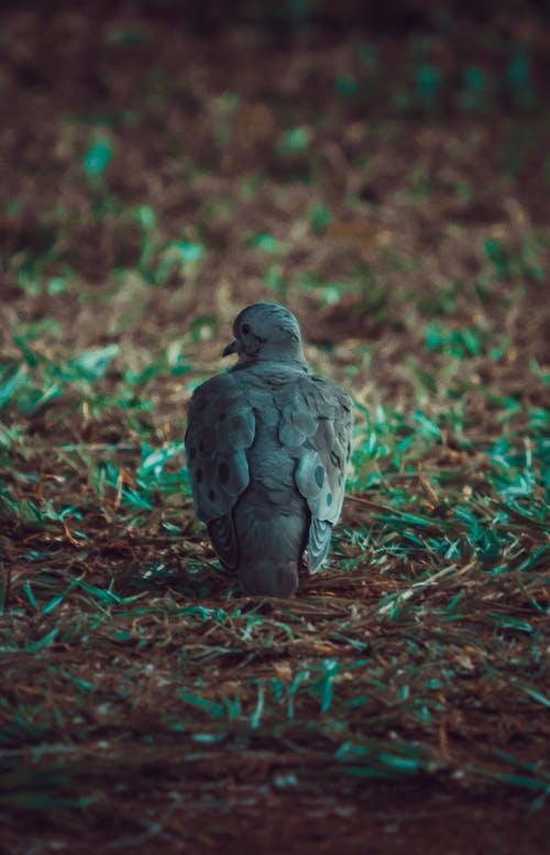 güvercin, güvercinler, hareket bulanıklığı içeren Ücretsiz stok fotoğraf