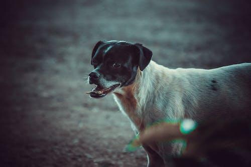 köpek başı, köpek fotoğrafçılık, köpek kafası içeren Ücretsiz stok fotoğraf