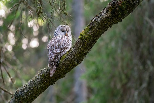 White and Brown Owl Perched on a Tree Branch
