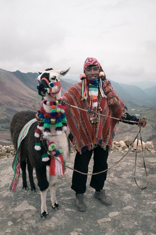 Безкоштовне стокове фото на тему «cusco, альпака, вуаль»