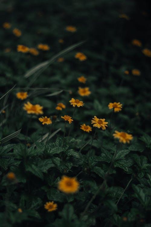 Ilmainen kuvapankkikuva tunnisteilla kasvi, kasvikunta, kenttä, kukat