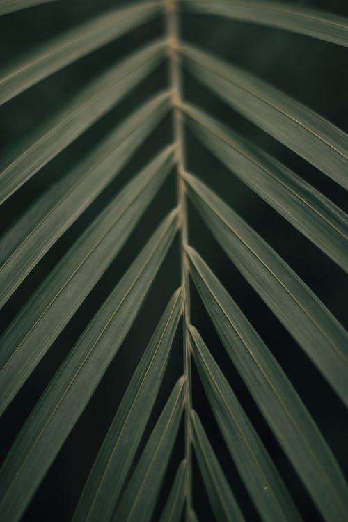 Kostenloses Stock Foto zu blätter, grün, nahansicht, pflanze