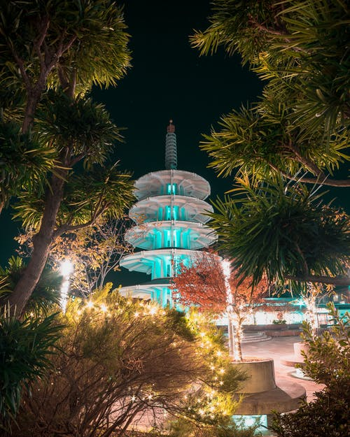 Free stock photo of branches, city night, japan town, Japantown