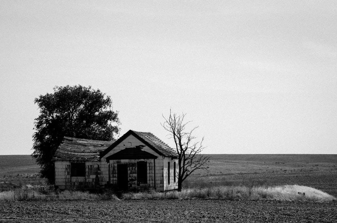 Grayscale Photo of House Near Bare Tree
