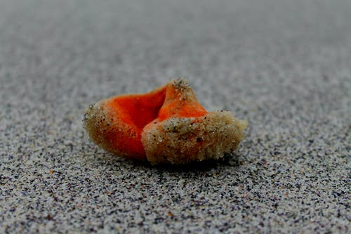 Free stock photo of beach, nature, sea sponge