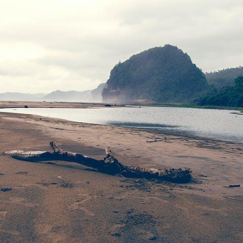 Free stock photo of beach, beach sand, branch, mountain