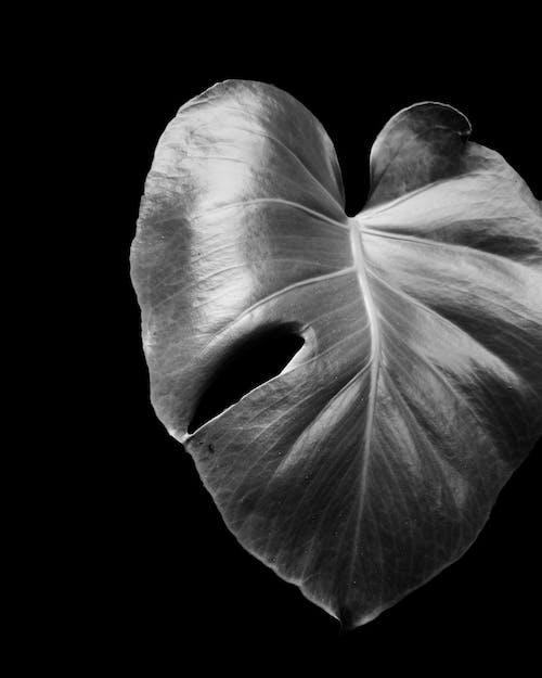 드라마틱한, 모노톤의, 미니멀, 큰 잎의 무료 스톡 사진