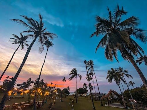 Imagine de stoc gratuită din faleză, palmieri