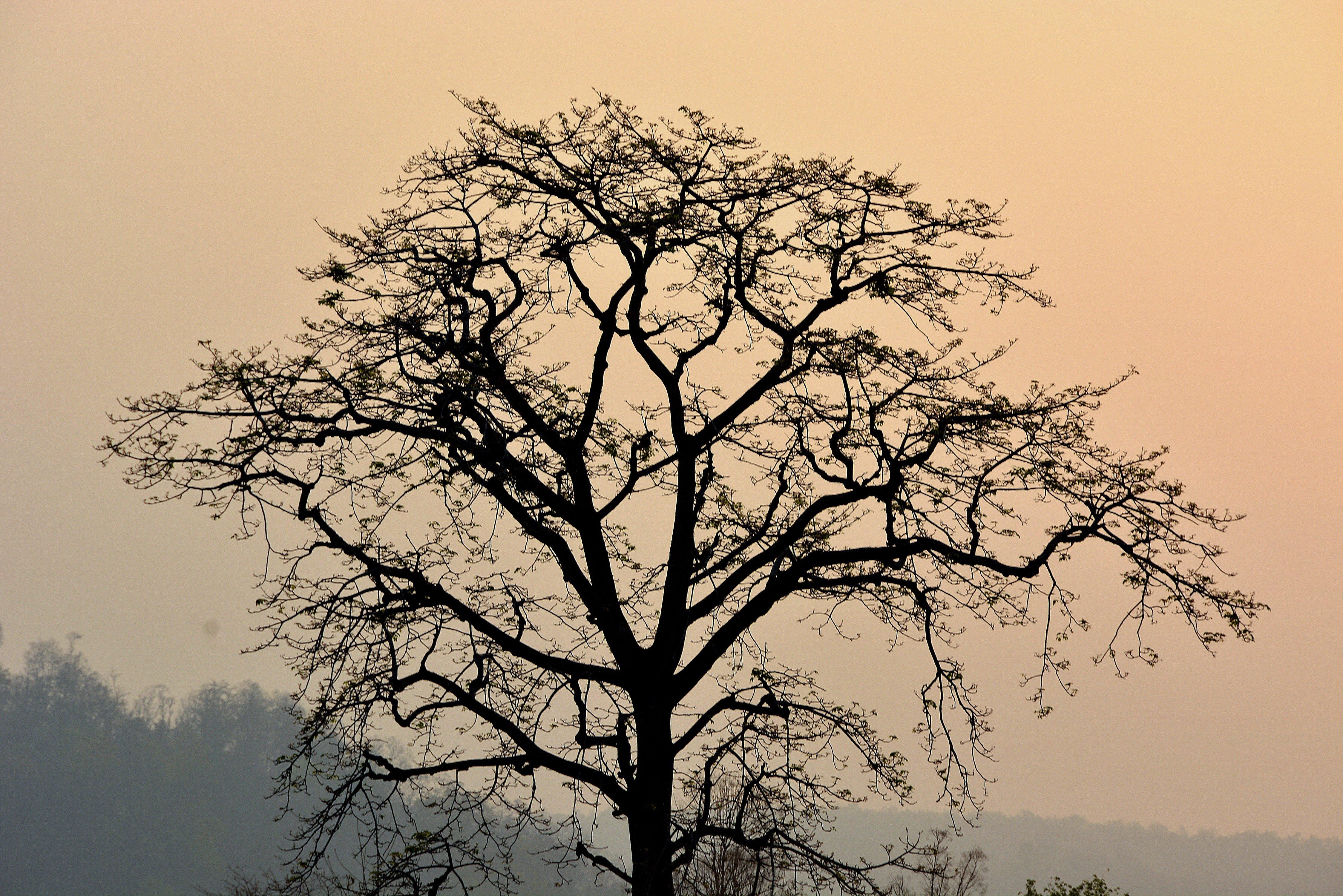 dawn, dusk, fog