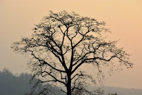 Immagine gratuita di alba, albero, nebbia