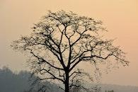 dawn, sunrise, silhouette