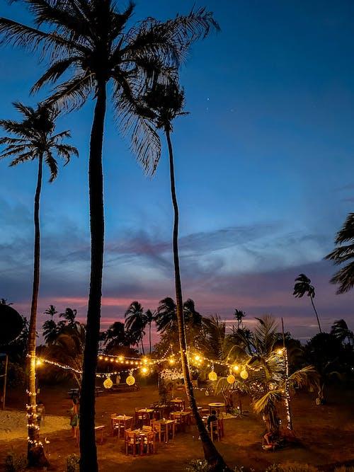 Imagine de stoc gratuită din faleză, noapte întunecată, palmieri, pe plaja